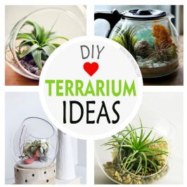 DIY Modern Terrarium Ideas