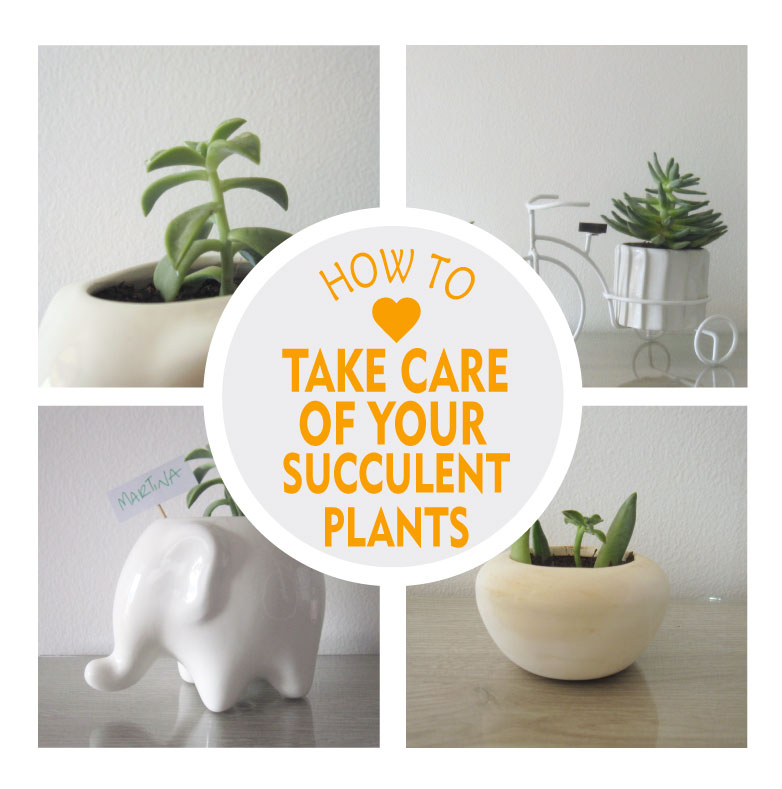 Succulent Care Guide For Beginners