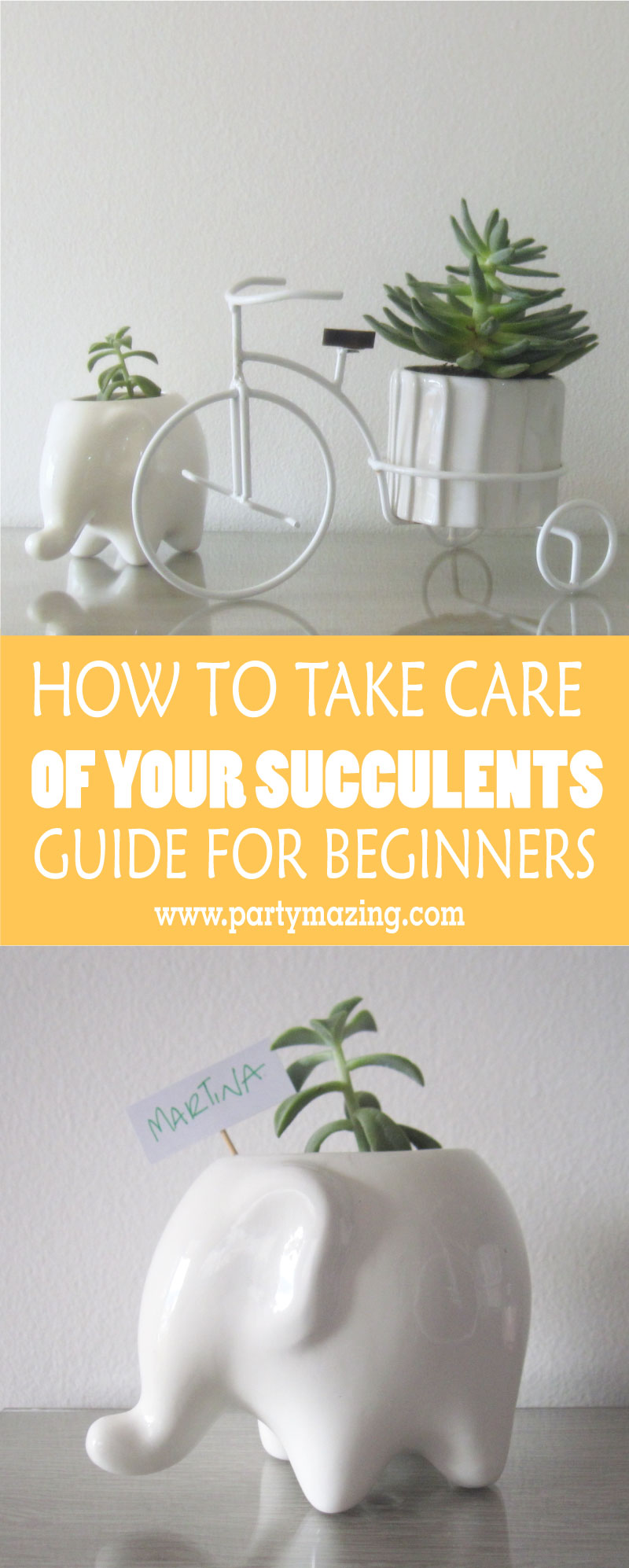 Succulent Care Guide for Beginners - 7 Things you have to ...