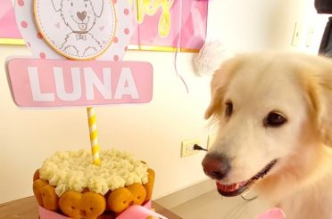 How to Plan your Dog's Birthday Party: Luna – Golden Retriever